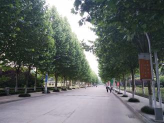 校园风景.jpg