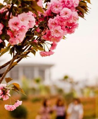 校园风景10.jpg