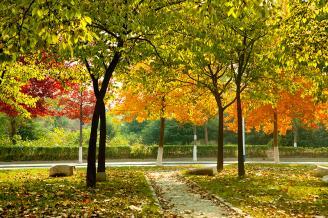 校园风景8.jpg