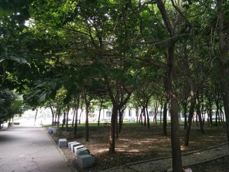校园风景2.jpg